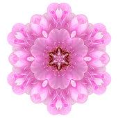 Kaleidoscopic Ball Dombeya Flower Mandala  Isolated
