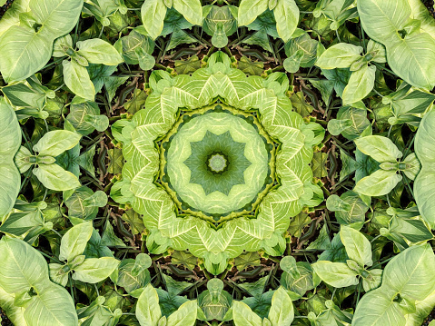 istock Kaleidoscopic oil painted leaf background 1181667689