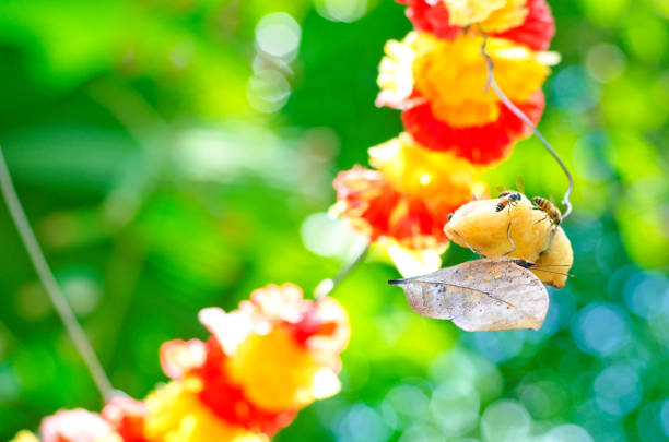 Best Dead Leaf Butterfly Kallima Inachus Stock Photos