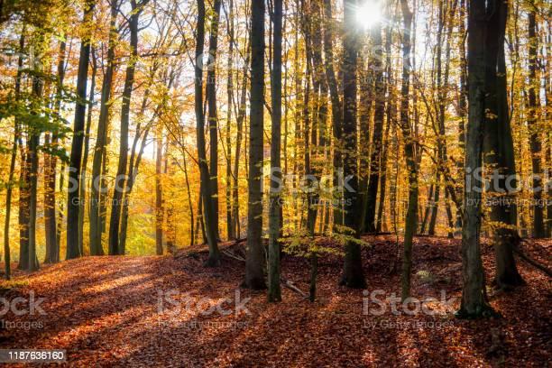 Photo of Kaltenhofer Moor in Schleswig-Holstein in Germany