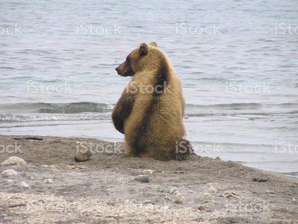 Kamtschatka bears- Kurile Lake - Russia stock photo