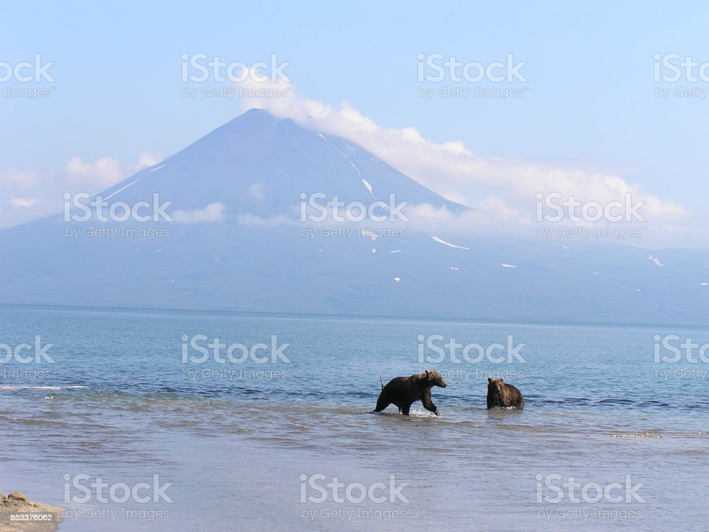 Kamtschatka-Bär – Kurilensee-Russland stock photo