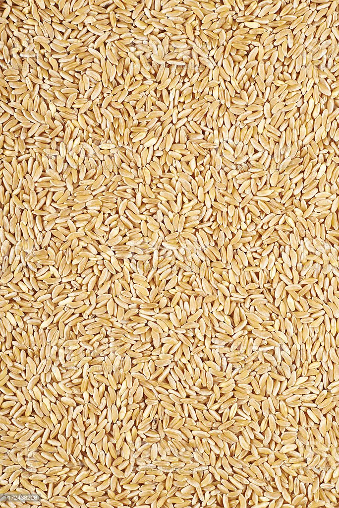 Kamut Grains stock photo