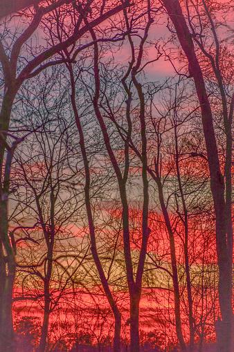 Dark trees against a vibrant sunset make for a Kandinsky-like landscape in the swamp.