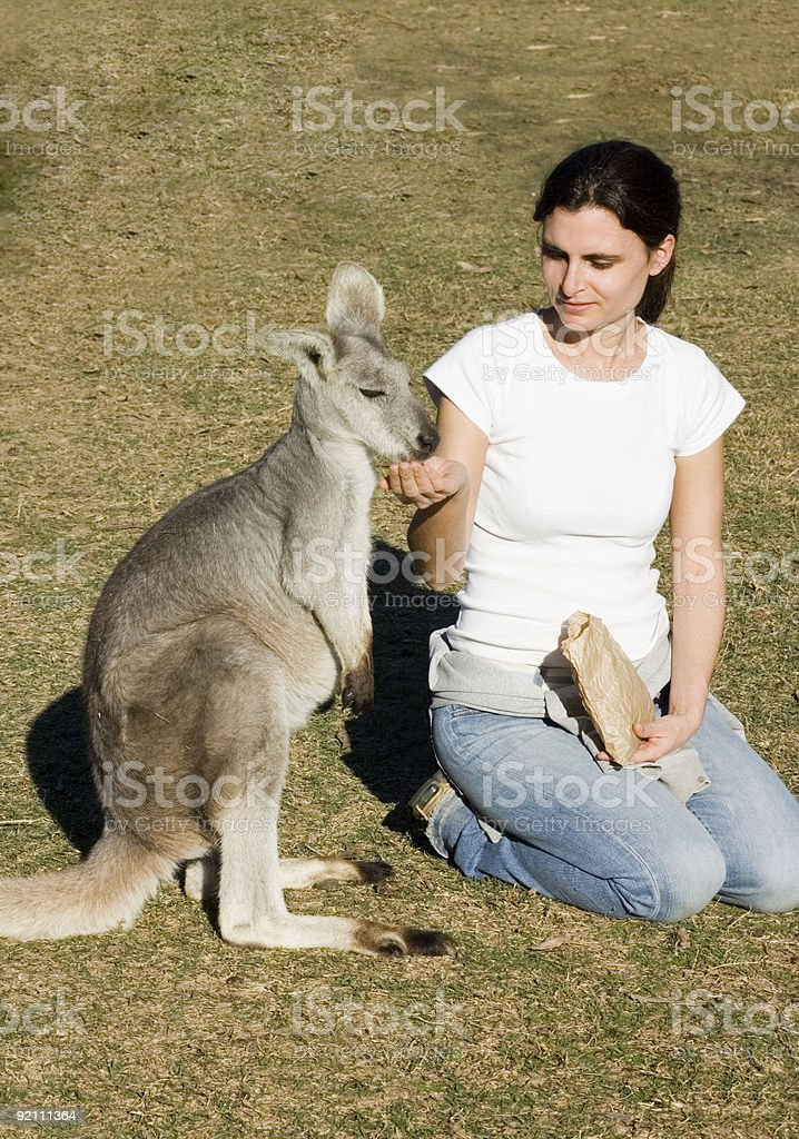 Kanga-feeding royalty-free stock photo