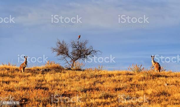Photo of FR 2 kangaroo and bird