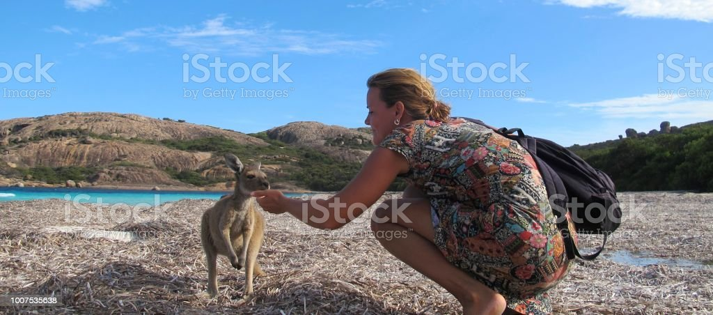 kangaroo, australia stock photo