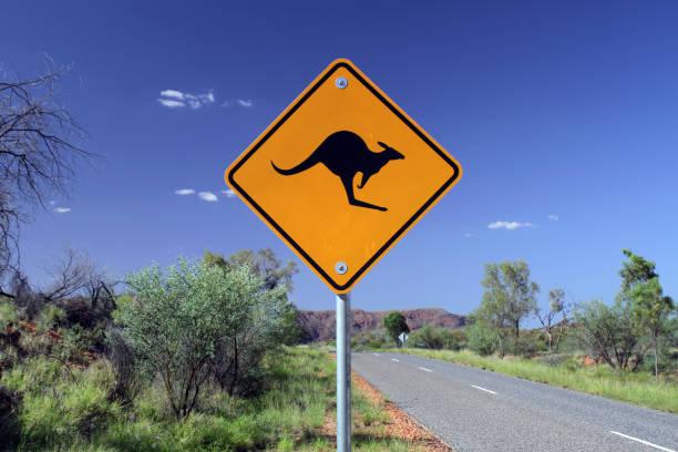 Kangaroo Crossing stock photo