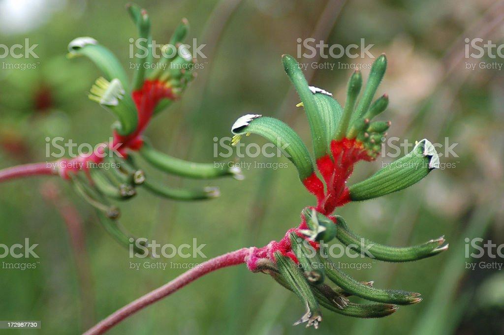Photo De Quatre Pattes Kangourou Image Libre De Droit Istock