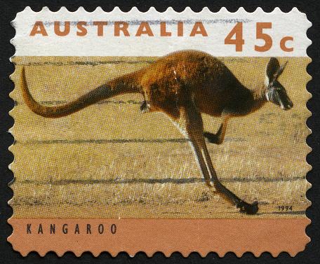 Kangaroo Stockfoto und mehr Bilder von Asiatisch-pazifischer Raum