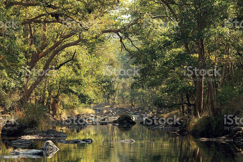 Kanha National Park bildbanksfoto