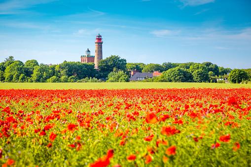 Kap Arkona lighthouse with red poppy flowers in summer, Ruegen, Ostsee, Germany