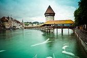 Swan on Lake Geneva