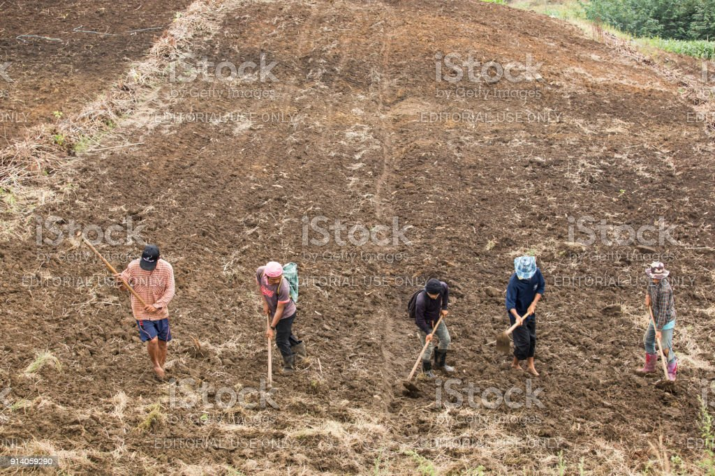 Karen workers on corn planting stock photo