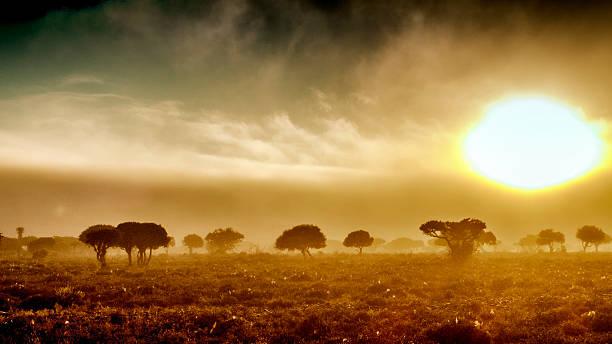 the kennedys-sonnenaufgang mit nebel - afrikanische steppe dürre stock-fotos und bilder