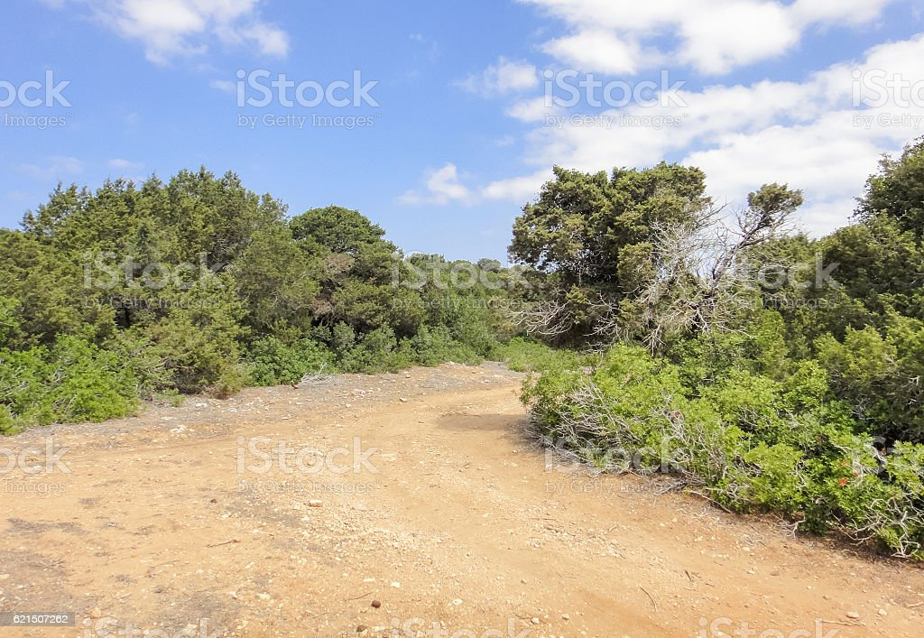 Karpasia wild nature. Karpass peninsula of Northern Cyprus foto stock royalty-free