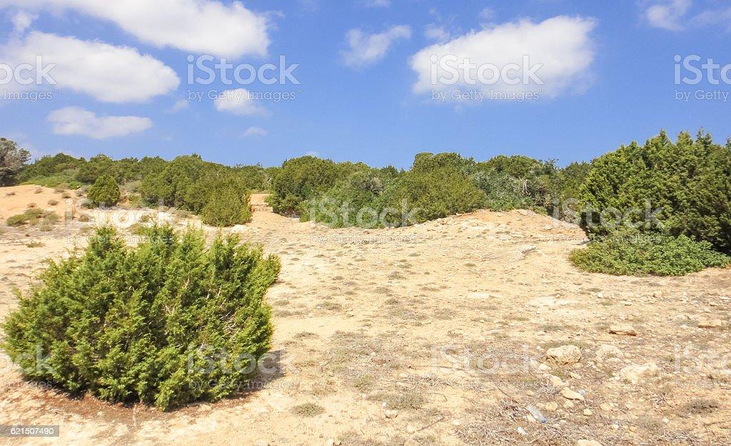 Karpasia wild nature. Karpass peninsula of Northern Cyprus (Rizokarpaso, Dipkarpaz) foto stock royalty-free