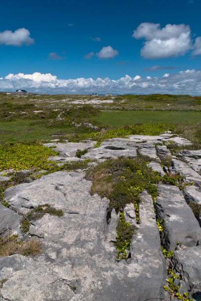 Karst landscape with Green Field and Clouds, Inishmore The burren of the Aran Islands here transitions to a fertile field of grass, husbanded by generations of islanders.  Photograph was taken from the path on Inishmore leading up to Dun Aonghasa.  The view is northeast toward the 12 Bens of Connemara.  Inishmore, Aran Islands, County Galway, Ireland michael stephen wills aran stock pictures, royalty-free photos & images