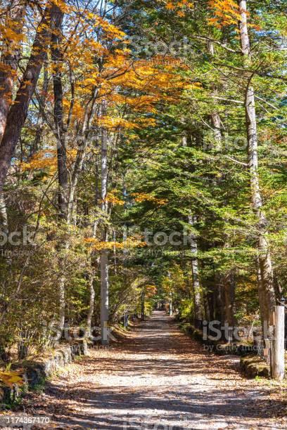 Photo of Karuizawa autumn scenery street view