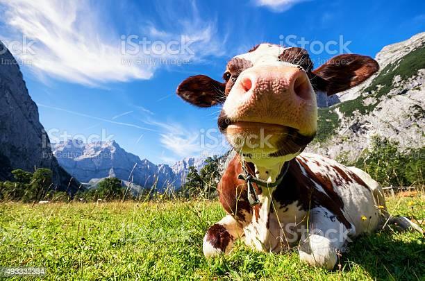 Karwendel mountains picture id493332334?b=1&k=6&m=493332334&s=612x612&h=hbbwhrqrkgayotjf4xxg9jt1lfyzib8 nl tt4wya9y=