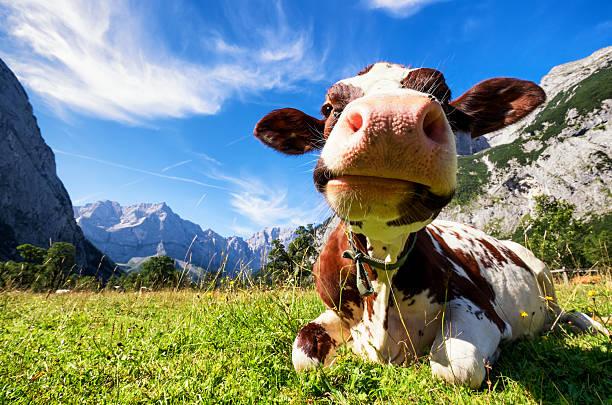 montes karwendel - áustria - fotografias e filmes do acervo