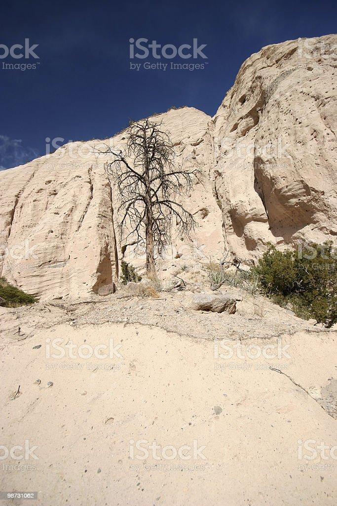 Kasha Katuwe árbol foto de stock libre de derechos