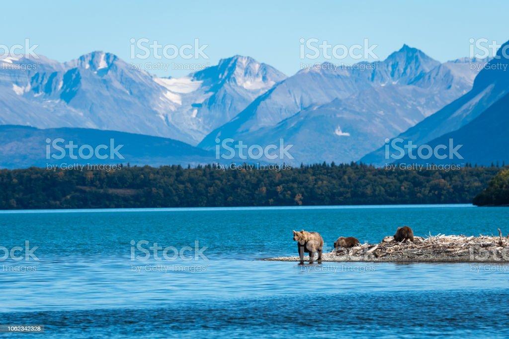 Katmai Bears stock photo