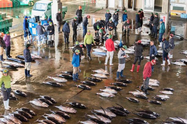 katsuura fish market, nachikatsuura, wakayama, japan - fishman imagens e fotografias de stock