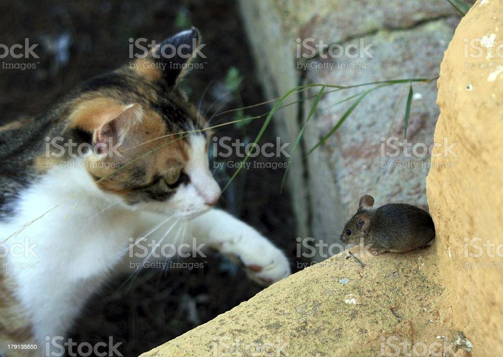 Katz und Maus royalty-free stock photo