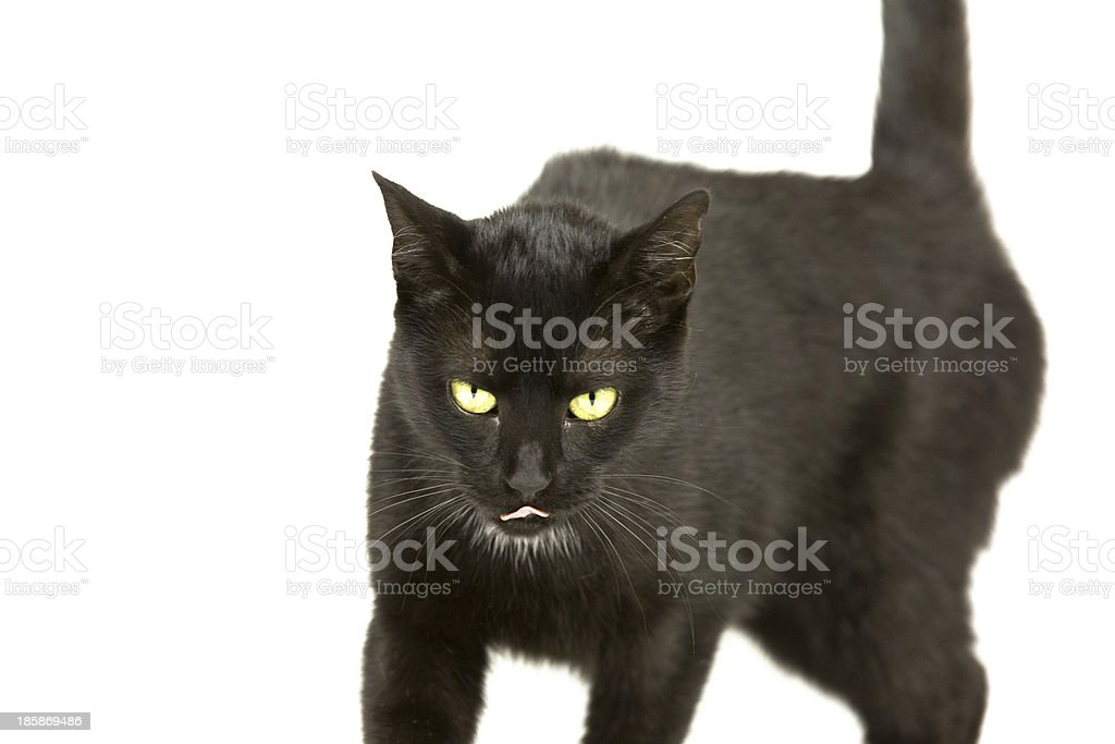Katze hat Hunger royalty-free stock photo