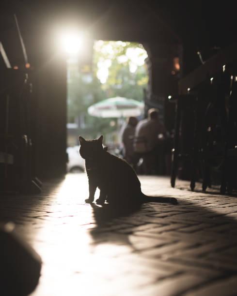 Katze in einer kneipe in amsterdam picture id1019012608?b=1&k=6&m=1019012608&s=612x612&w=0&h=d ct86ynnm4kxc  j ckkfjdowdg4kyb2iw4xnwvhtq=