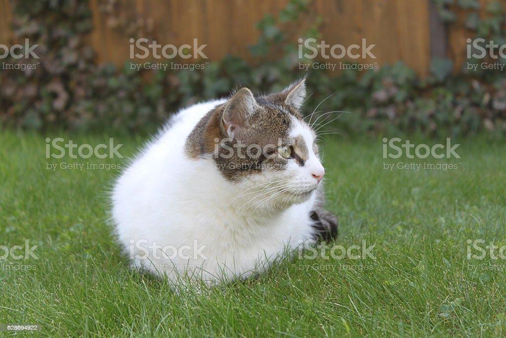 Katze liegt im Gras stock photo