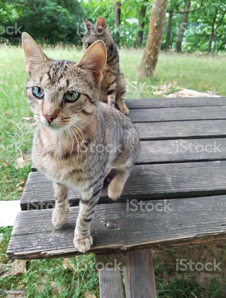 Katzen stock photo