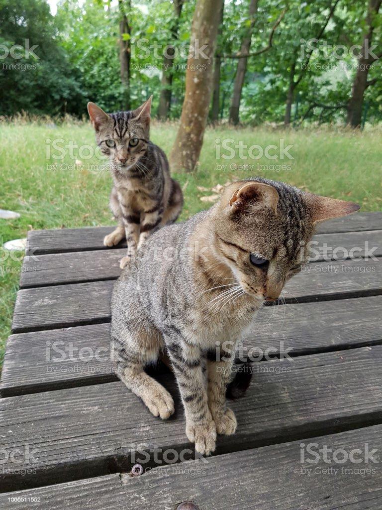 Katzenkinder im Freien stock photo