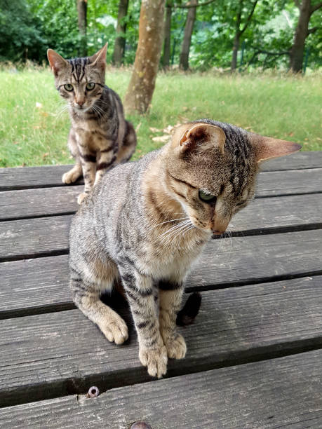Katzenkinder stock photo