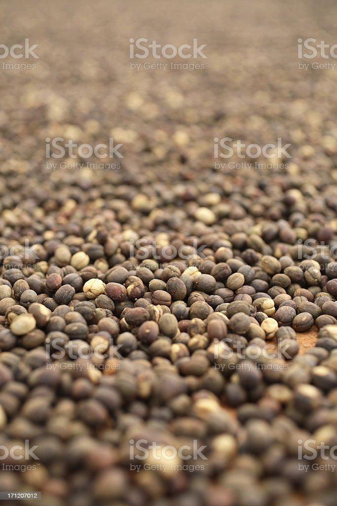 Kauai: Drying Coffee Beans royalty-free stock photo
