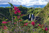 Wide shot of spectacular mountains and waterfalls foregrounded by colorful red flowers in Kauai