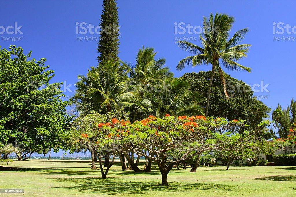 Kauai Hawaii Pacific ocean front resort hotel tropical garden stock photo