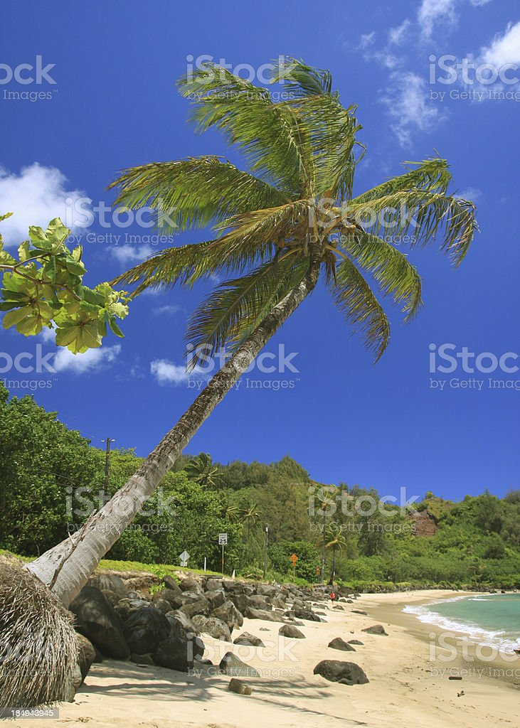 Kauai Hawaii Pacific ocean palm tree beach scenic stock photo