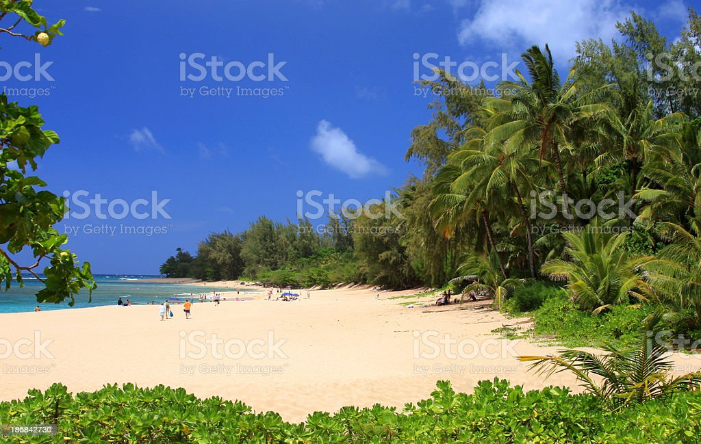 Kauai Hawaii Pacific ocean palm tree white sand beach scenic stock photo