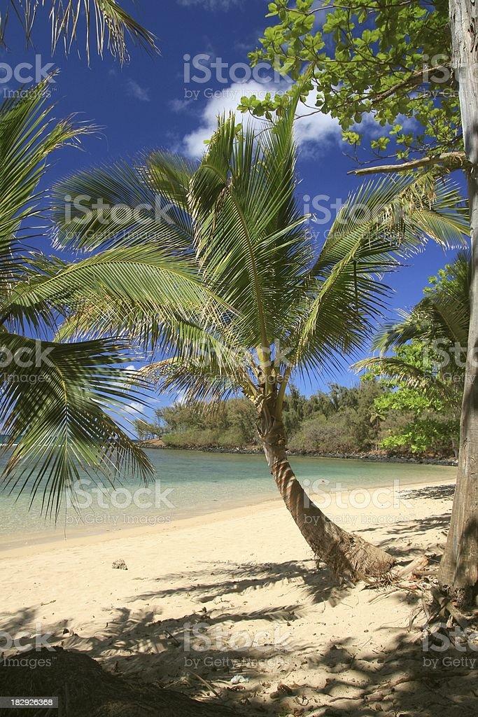 Kauai Hawaii palm tree beach tropical scenic stock photo
