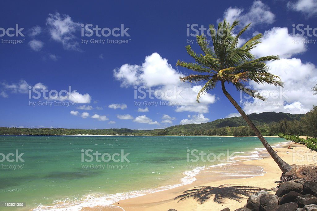 Kauai Hawaii palm tree tropical style beach scenic stock photo