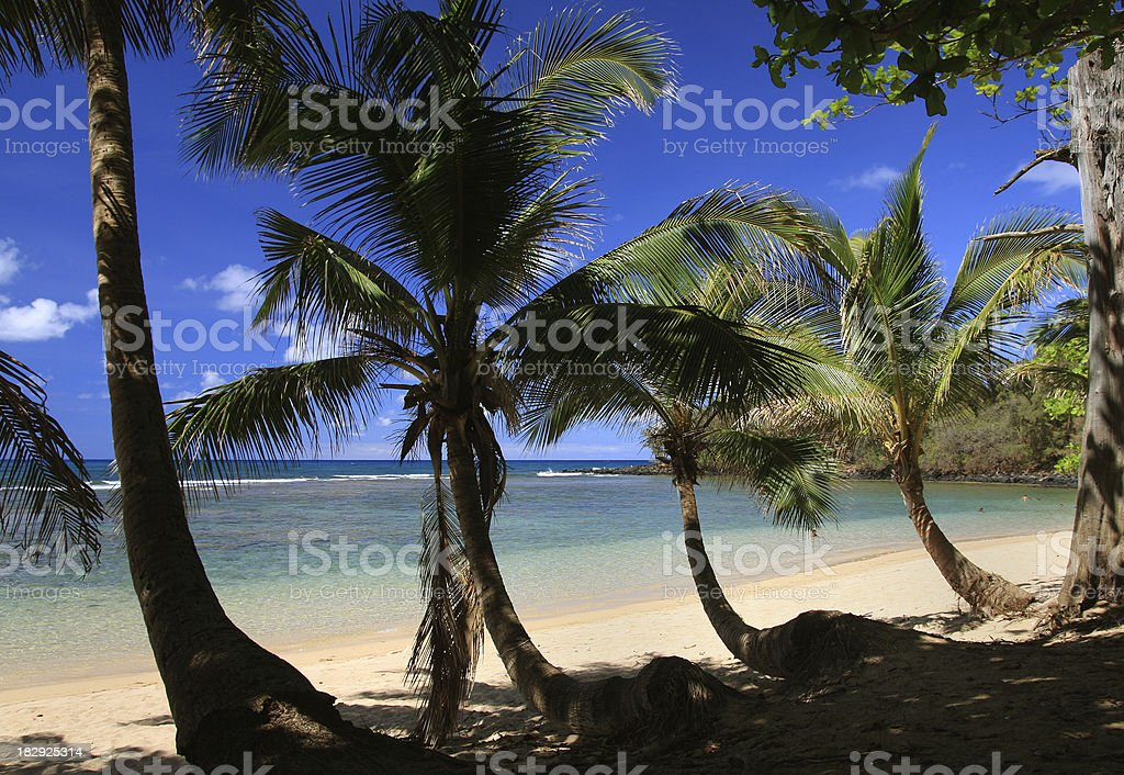 Kauai Hawaii palm tree tropical style scenic stock photo