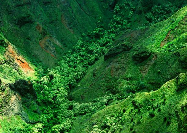 Kauai Ravine 3 stock photo