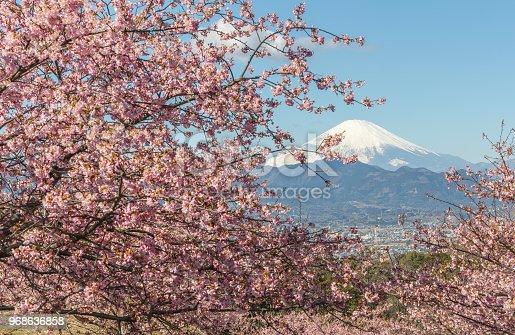 istock Kawazu Sakura and Mountain Fuji in spring season 968636858