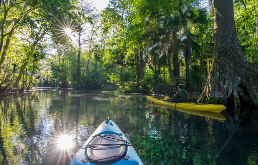 A kayaker in morning light on the Silver River at Silver Springs State Park.