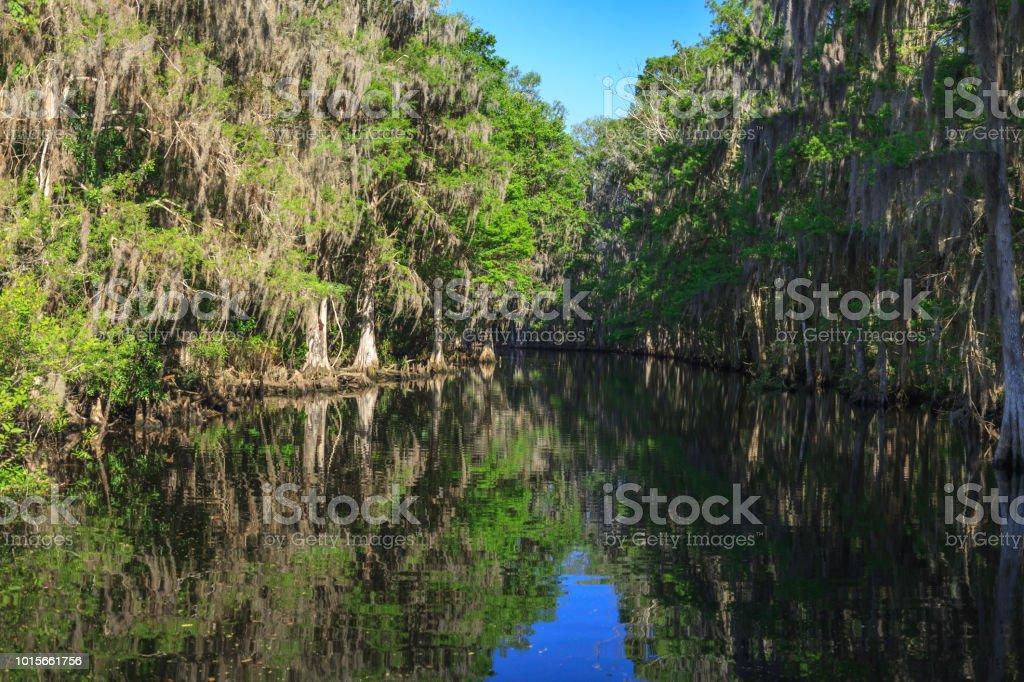 Kayakers view of Shingle Creek stock photo