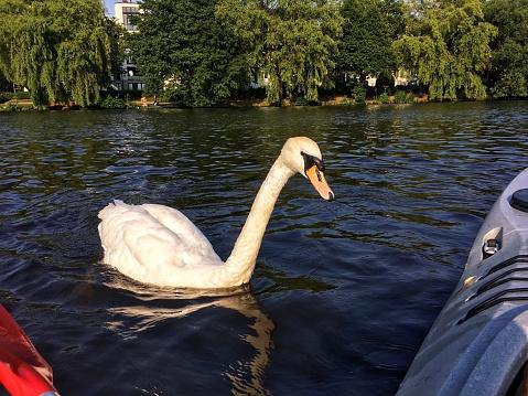 Kayaking around Hamburg