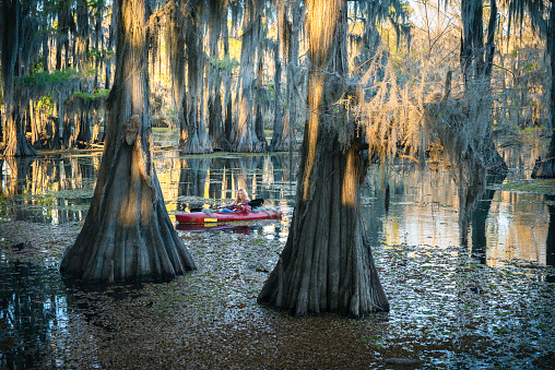 Solo female paddles a kayak through a bald cypress swamp filled with spatterdock, an invasive aquatic seaweed