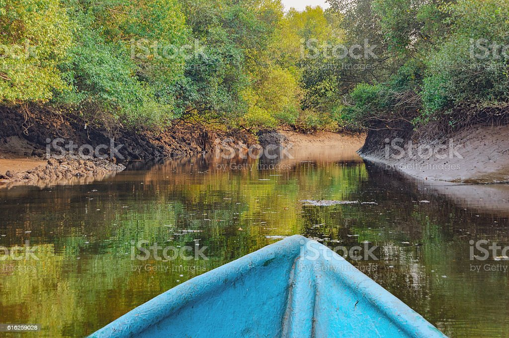 Kayaking in tropical mangrove tunnels stock photo
